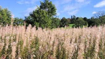 Beautiful British countryside