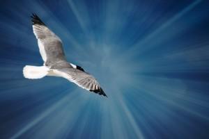 seagull-411805_640