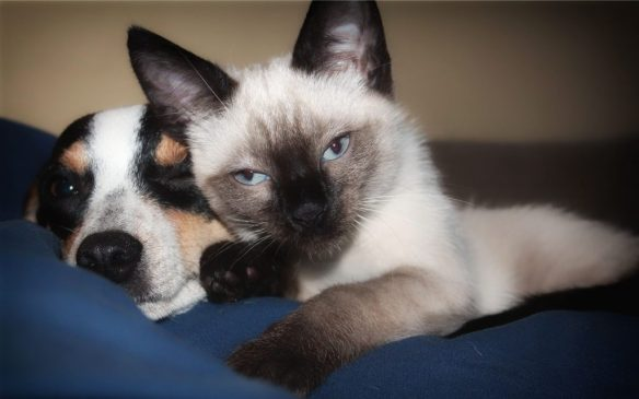dog-and-cat-best-friends