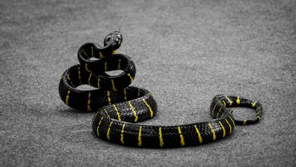 poisonous-snake