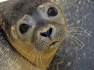 compassion-sad-face-seal