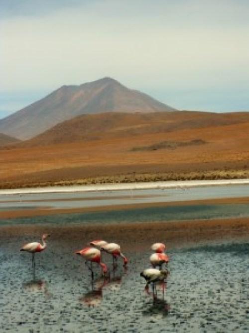 laguna hedionda, salar de uyuni, bolivia, flamingo