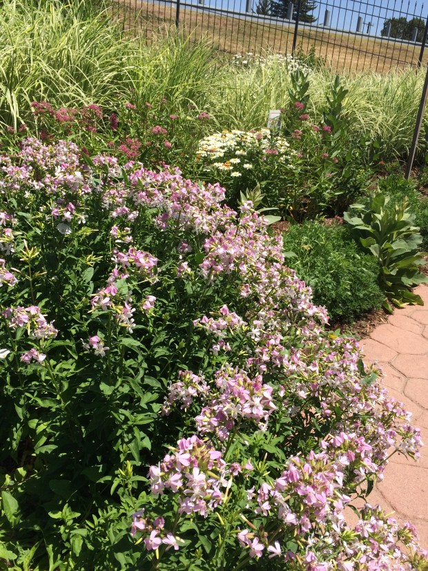 Walking path with native plants in Greeley