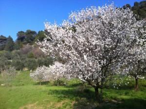 Fleur Prunelle