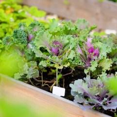 coltivare le verdure in vaso