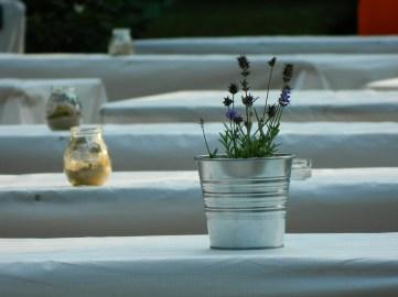 allontanare le zanzare in modo naturale con le piante