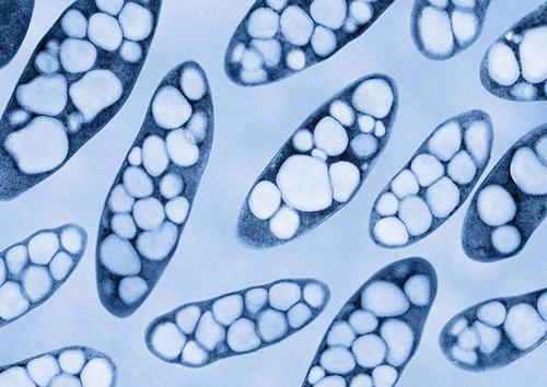 bioodpady technologie pha bakterie