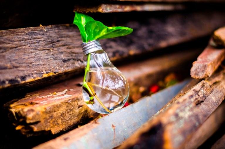 ekologiczne życie