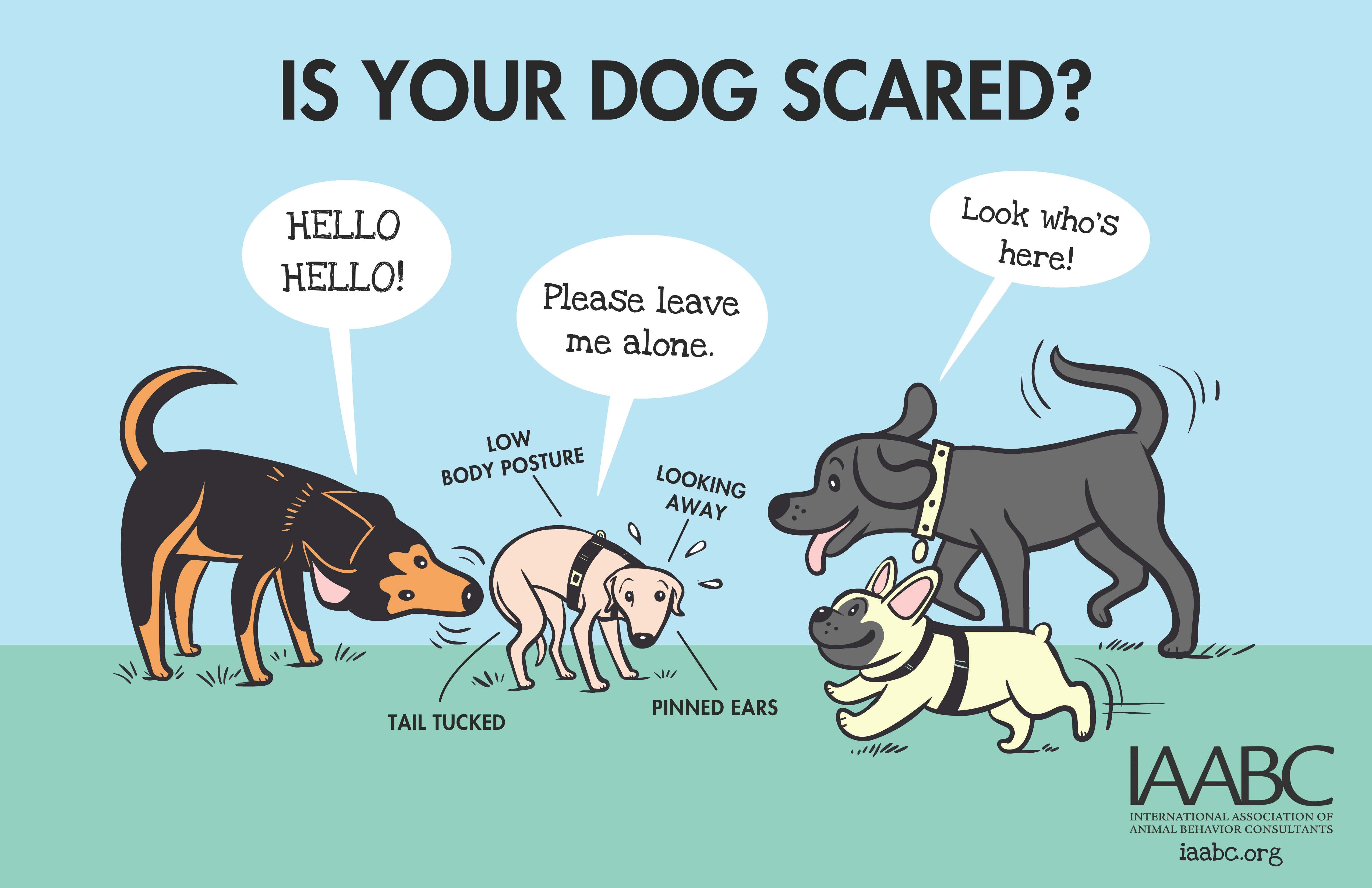 https://i2.wp.com/www.greenacreskennel.com/blog/wp-content/uploads/2016/02/iaabc-dogpark-Is-Your-Dog-Scared.jpg