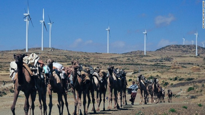 Camels walk along the road near turbines at Ashegoda wind farm in Ethiopia's northern Tigray region