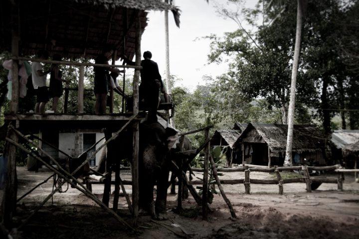 Getting on an Elephant Trek