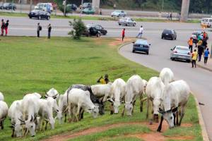 Nigerian Governors Ban Open Grazing, Free Movement Of Cattle In Nigeria    Greenbarge Reporters