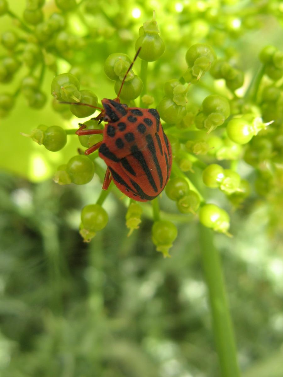 green corfu corfu insects