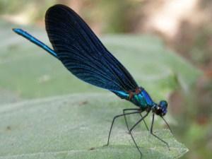 libeloula-mple