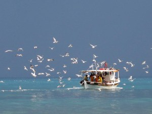 seagulls-and-boat
