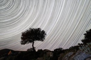 star-trails-and-tree-on-pantokrator-mountain