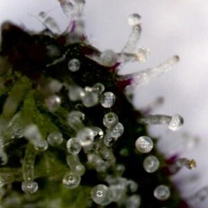 marijuana analysis and chemistry