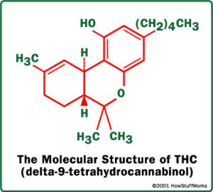 cannabis chemistry