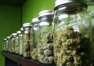 cannabis colleges
