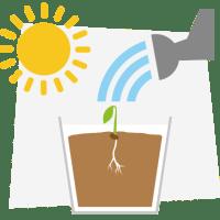 Cannabis Seeds and Seedlings Studies