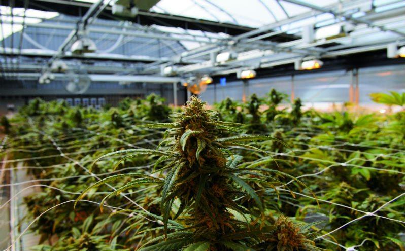 Using Sunlight & Indoor Grow Conditions