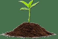 Cannabis Soil Amendments