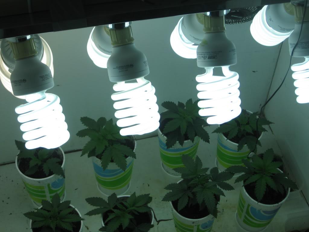 Cfl Grow Lights