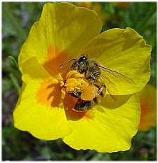 bees4 1822