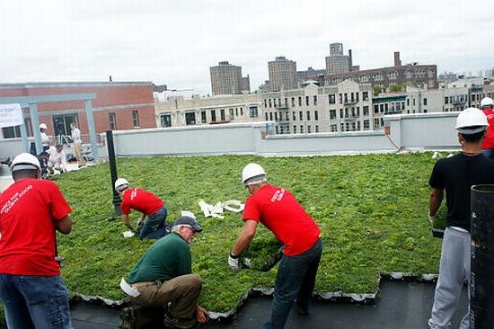bronx green roof