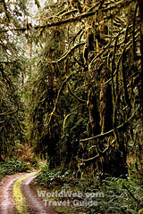 canadas coast rainforest