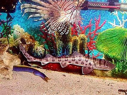 leopardsharkwlionfish 45