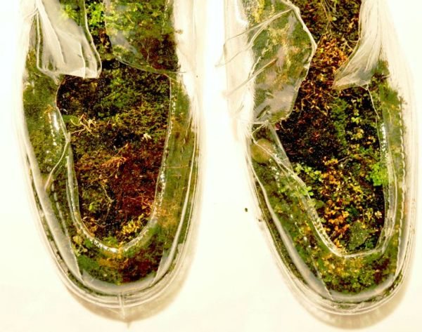 naturas insoles made with moss and rocks 1