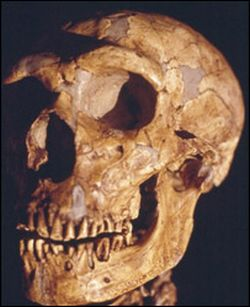neanderthals died out about 29000 years ago