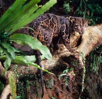 rainforest east of malaysia 9