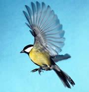 south american birds