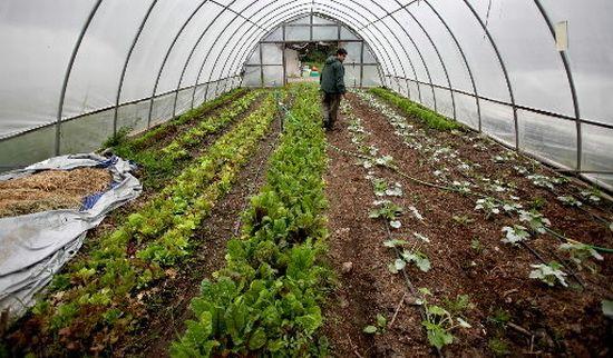 urban greenhouse