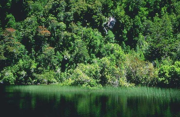 Valdivian