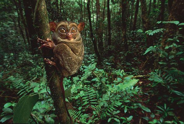 About Facts 10 Rainforest Amazon