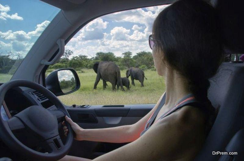 Feed it to the Elephants