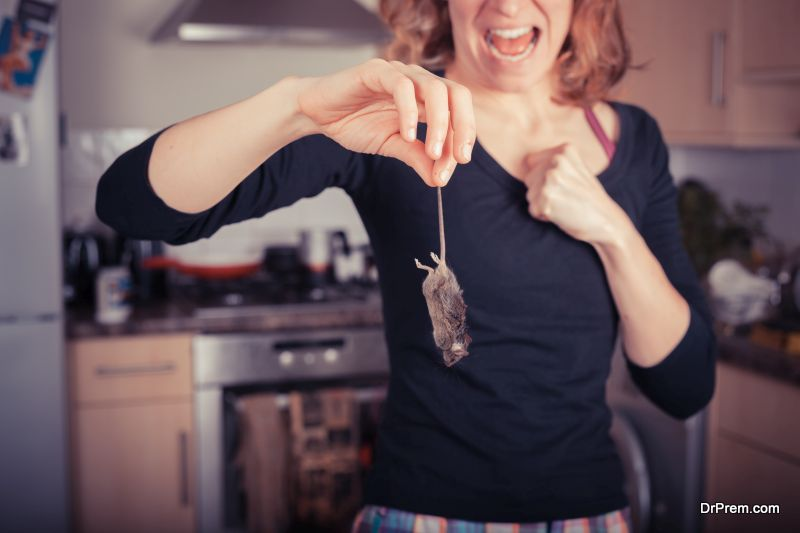 Getting-rid-of-household-pests