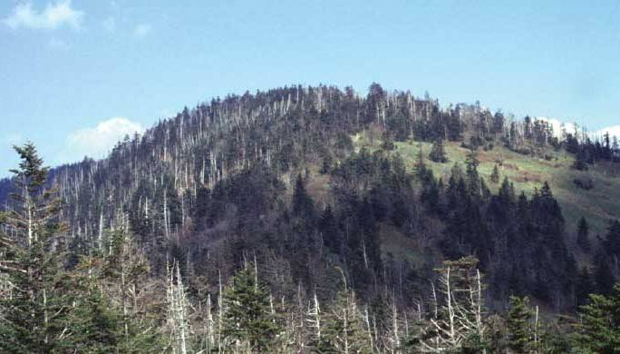 Clingmans Dome (highest point in the Great Smokies). The effects of clearcut logging and fire are clearly visible on the right; the dead trees are Frasier Fir, killed by the Balsam woolly adelgid. United States Geological Survey photo.