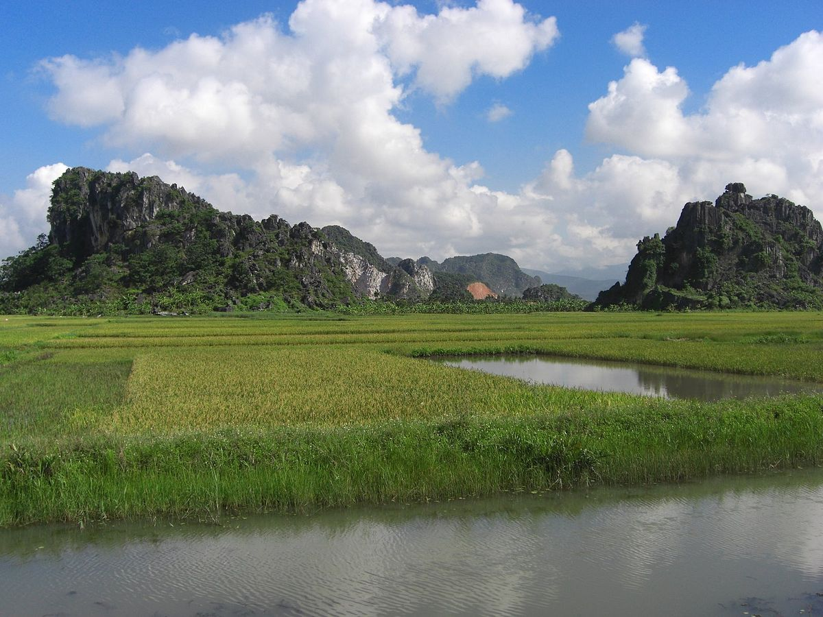 Paddy fields in Ninh Binh Province, Vietnam (Dinkum, Wikimedia Commons)