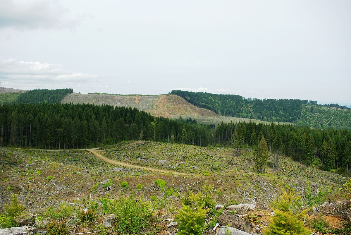 Clearcut forest (MO Stevens, Wikimedia Commons)