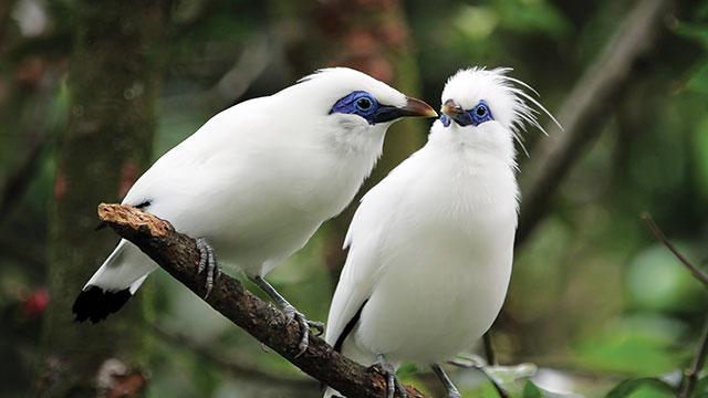hewan endemik