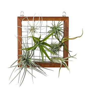 Mkono Air Plant Frame Apartment Living