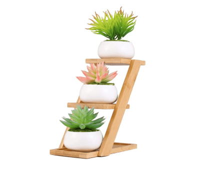 Succulent Pots with Bamboo Stand Apartment Living