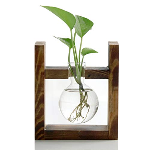 Glass Bulb Vase With Wooden Stand Apartment Living