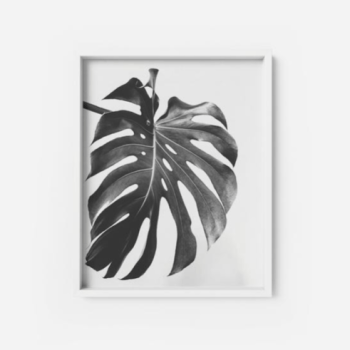 Monstera Deliciosa Art Print #3 Apartment Living