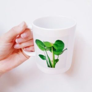 Monstera Mugs Accessories [tag]