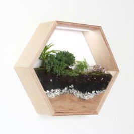 Hexagon Hanging Wall Terrarium Apartment Living [tag]